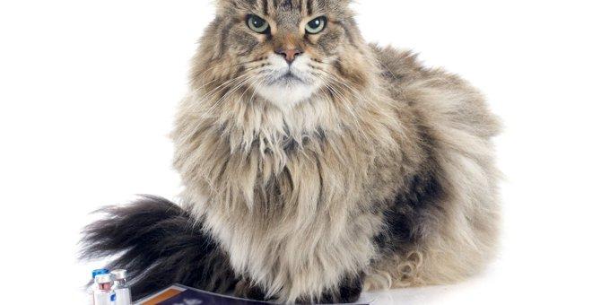 猫に『ワクチン接種』はなぜ必要?その理由や種類・防げる病気、受け方を解説