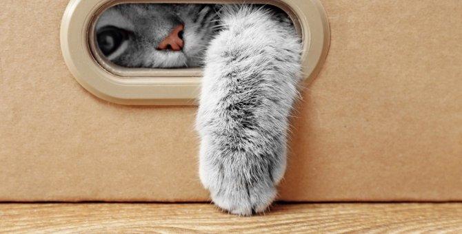 猫はなぜ「狭い場所」が好き?気になる疑問を徹底解析!