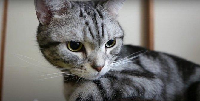 謎のカキカキ!濡れてもへっちゃらな猫ちゃんの理由とは?
