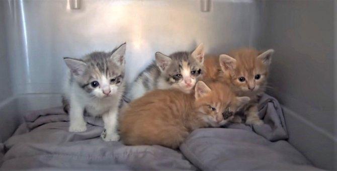 猫の親子が粗大ごみのソファの中に。回収日前に保護できて救われた命