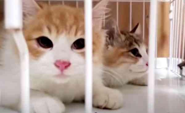 難航する子猫たちの保護活動…SOSに温かい救いの手が集まる!