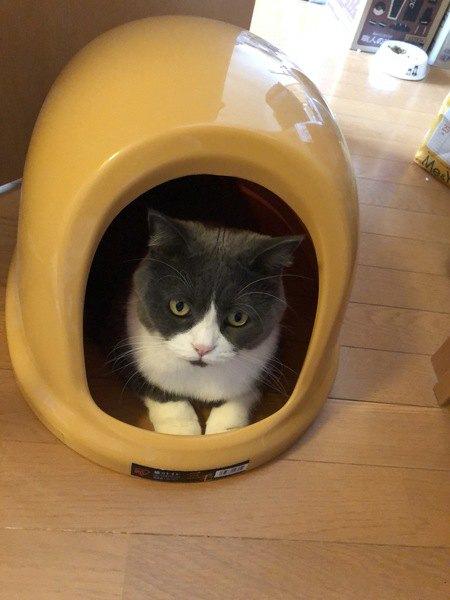 猫のトイレが臭い!考えられる原因3つと消臭方法