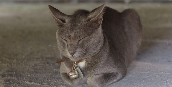 猫と芸術家のスピリチュアルな力の共通点とは