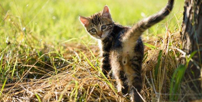 意外と多い…!猫の『肛門トラブル』3つ