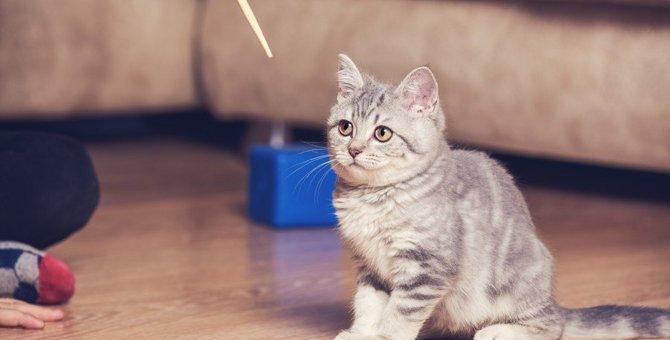 猫の『クリッカートレーニング』って何?5つの手順を徹底解説!
