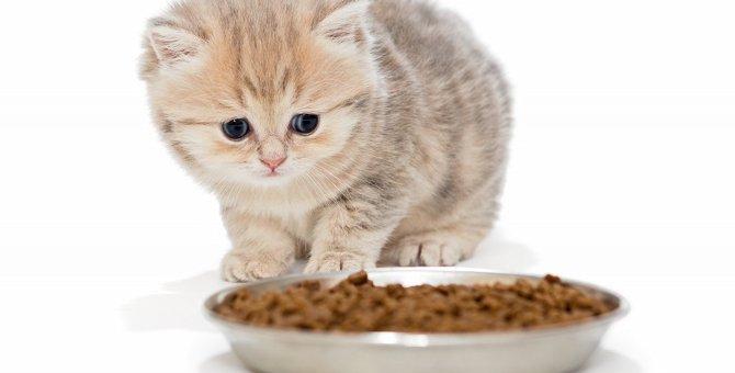 子猫用ドライフードのおすすめランキング!与える時期や選び方など