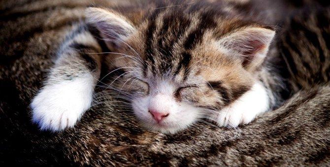 猫が甘える時にする6つの仕草と心理