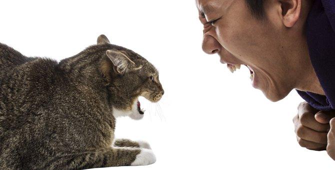 猫が嫌いな音とその活用について