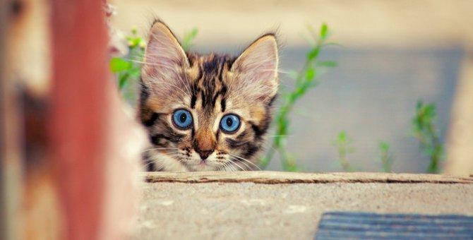 猫の不思議な5つの行動