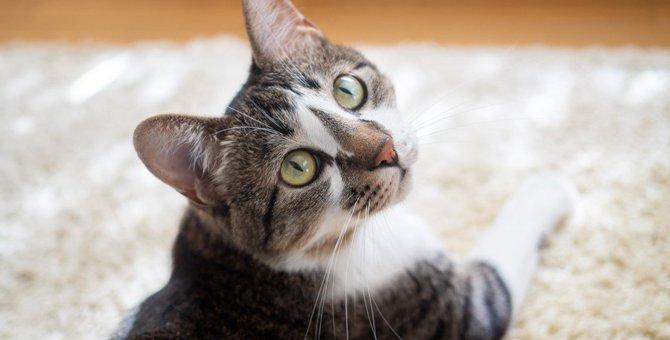猫が『覚えやすい言葉』5つ!覚えさせるコツとは?