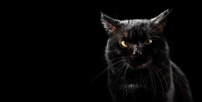 猫の恐ろしい事故・怪我に繋がる飼い主の危険行為5つ!改めるべき心構えと予防策とは?