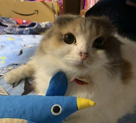 『賢い猫』に育てるおすすめの遊び方5選