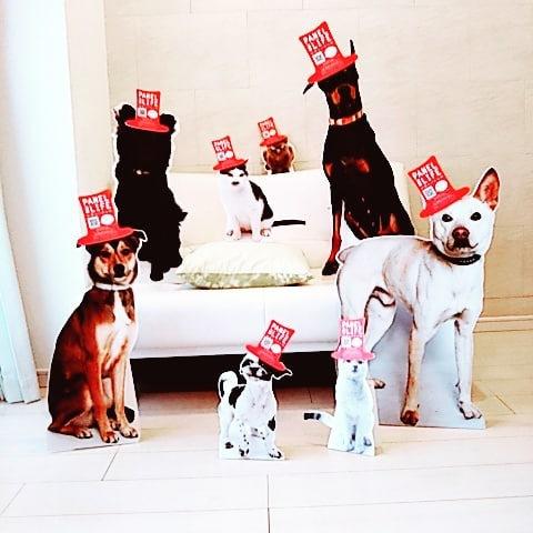 保護猫・犬のための新しいプロジェクト「Panel for Life (パネル フォー ライフ) 命のパネル」