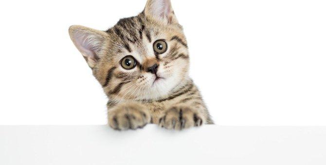 猫が首をかしげる5つの理由とは