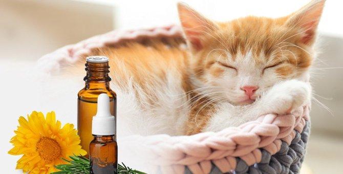 猫に安全な『アロマオイル』とは?使用する際の注意点3つ
