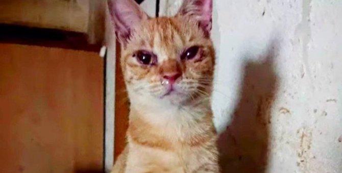 25匹の猫たち全保護!悲惨な姿だった猫が次々に美猫へ