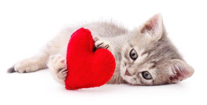 猫が飼い主に大好きという気持ちを伝える9つのサイン