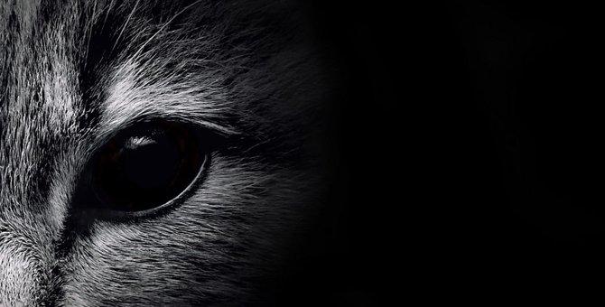 化け猫に猫が化けると言われる理由とその伝説について