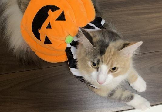 猫の飼い主が秋に気をつけたほうがいいこと5つ