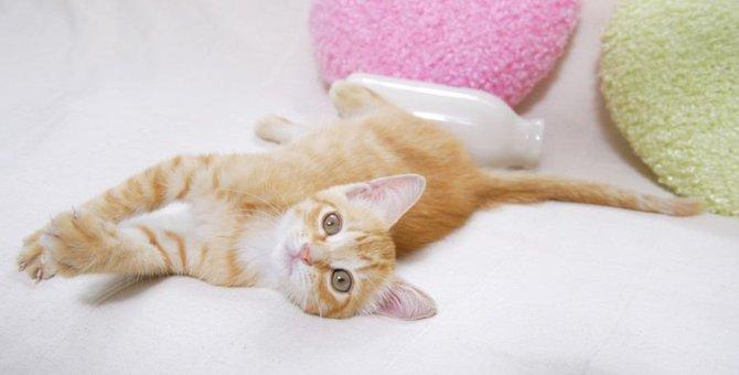 猫が急に『ゴロンと寝転ぶ』4つの理由