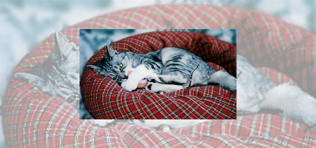 マンション敷地に居ついた猫の保護。管理人が近々処分予定の緊急SOS