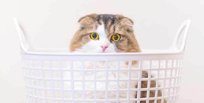猫が箱以外で『入りがちなもの』4選