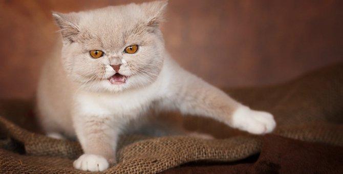 猫を叱るのに正しいタイミングとは?間違えると逆効果に!