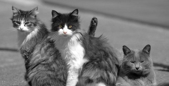 猫の都市伝説!「秘密結社NNN」ってなに?