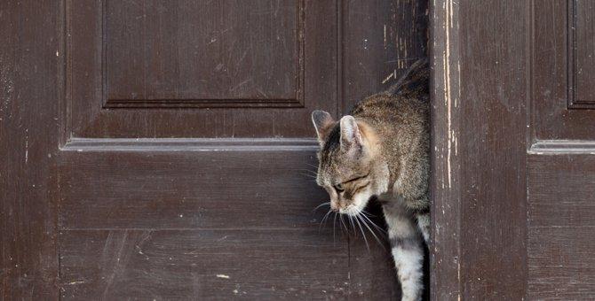 猫の脱走防止扉の3つのタイプとその選び方