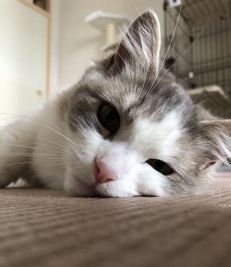 心変わり?猫の態度がいつもと違う時の原因5つ