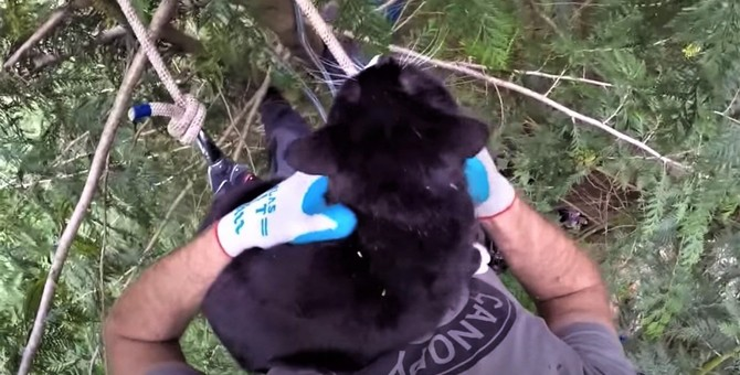 木の上に迎えに行ったのに逃げてしまう猫…帰ろう、家で相棒が待ってるよ!