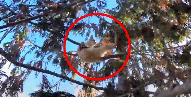 「危ないっ!落ちる!」手に汗にぎる木の上の救助活動