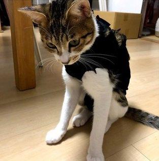 着なくなったTシャツで猫の体にぴったりな『術後服』を手作りしてみよう!