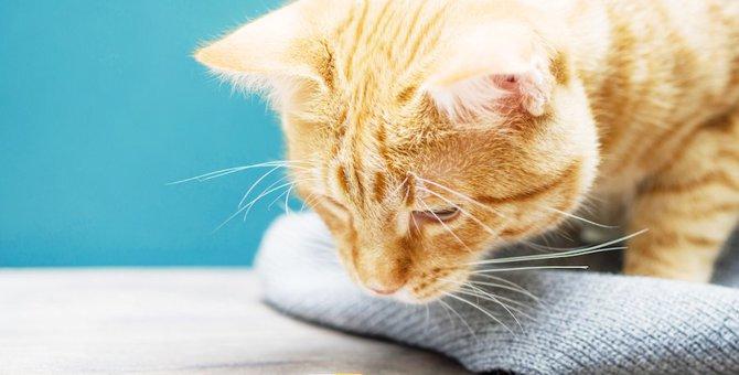 お薬が苦手な猫にできる上手な飲ませ方4選