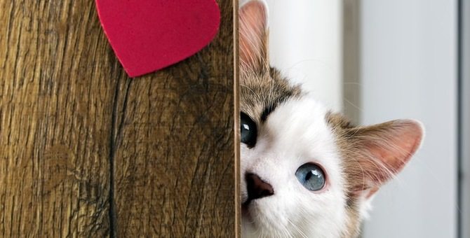 猫の繁殖期はいつ?対策と特徴について