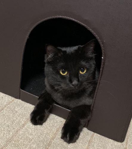 隠れファンを探せ!猫好きさんの共通点5つ