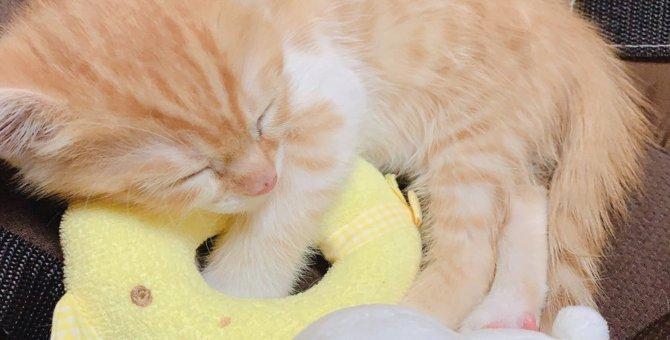 猫と赤ちゃんは仲良く出来るの?暮らす時の注意点と過ごし方!