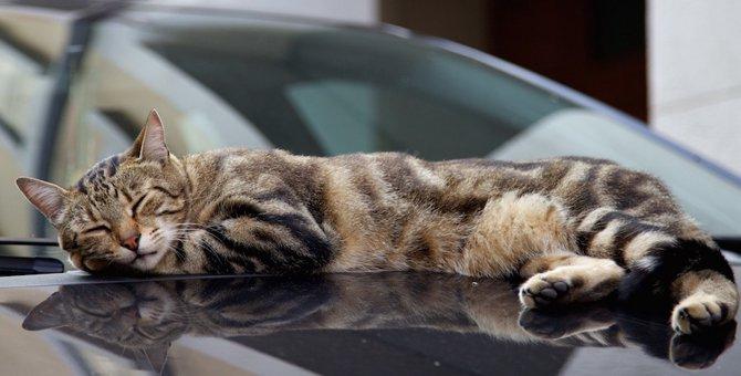 野良猫はどうして駐車場によく居るの?8つの考えられる理由