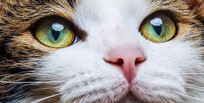 猫の目の病気7つ 原因や予防の方法