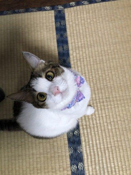 猫がスキンシップを取りたがっているときの仕草や行動5つ
