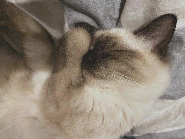寝てる猫が喉をゴロゴロ鳴らす理由とは?