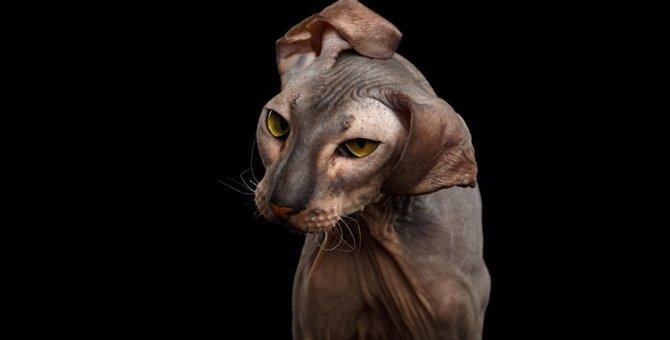 猫ドリルの撮影方法