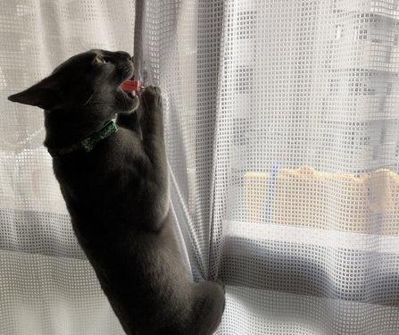 猫がカーテンに登る理由と対策