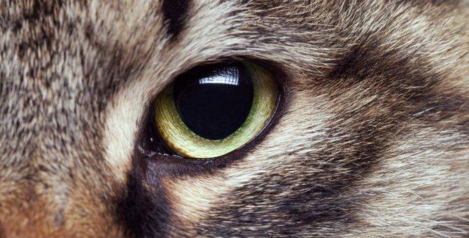 猫の目の特徴と疾患について