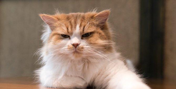嫌なことがあったときに猫がする10の仕草