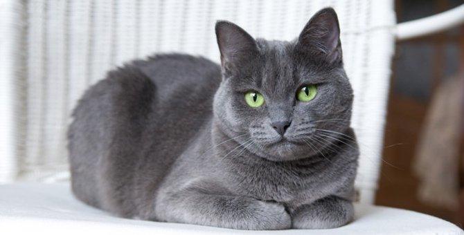 猫が前足をたたんで座る4つの心理