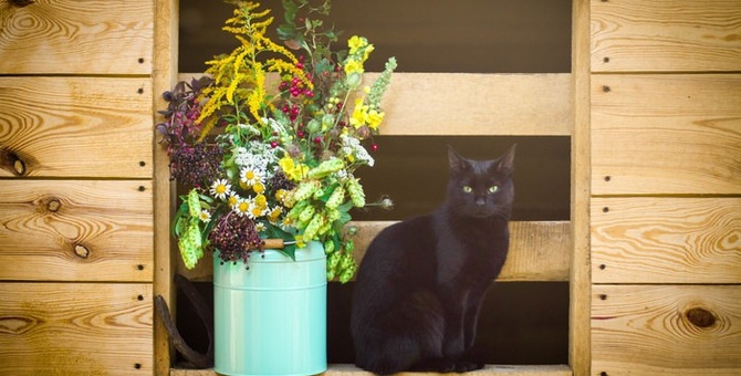 猫が嫌いなハーブと食べても安全なハーブについて