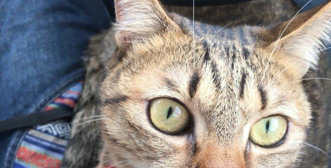 猫も老眼になる?気づいてあげたい老化のサイン