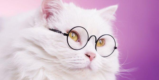 猫も『視力低下』するの?注意すべき7つの兆候と予防策