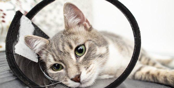 猫の避妊手術の方法、当日から退院までの流れ